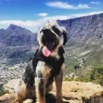 western cape dog friendly accommodation