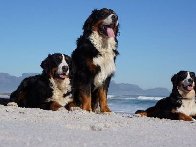 western cape pet friendly accommodation