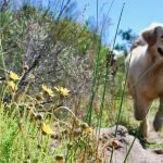 dog safety from snakes & ticks