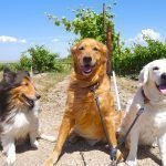 wine estate dogs