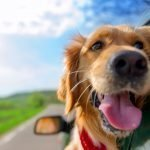 road-trip-dogs