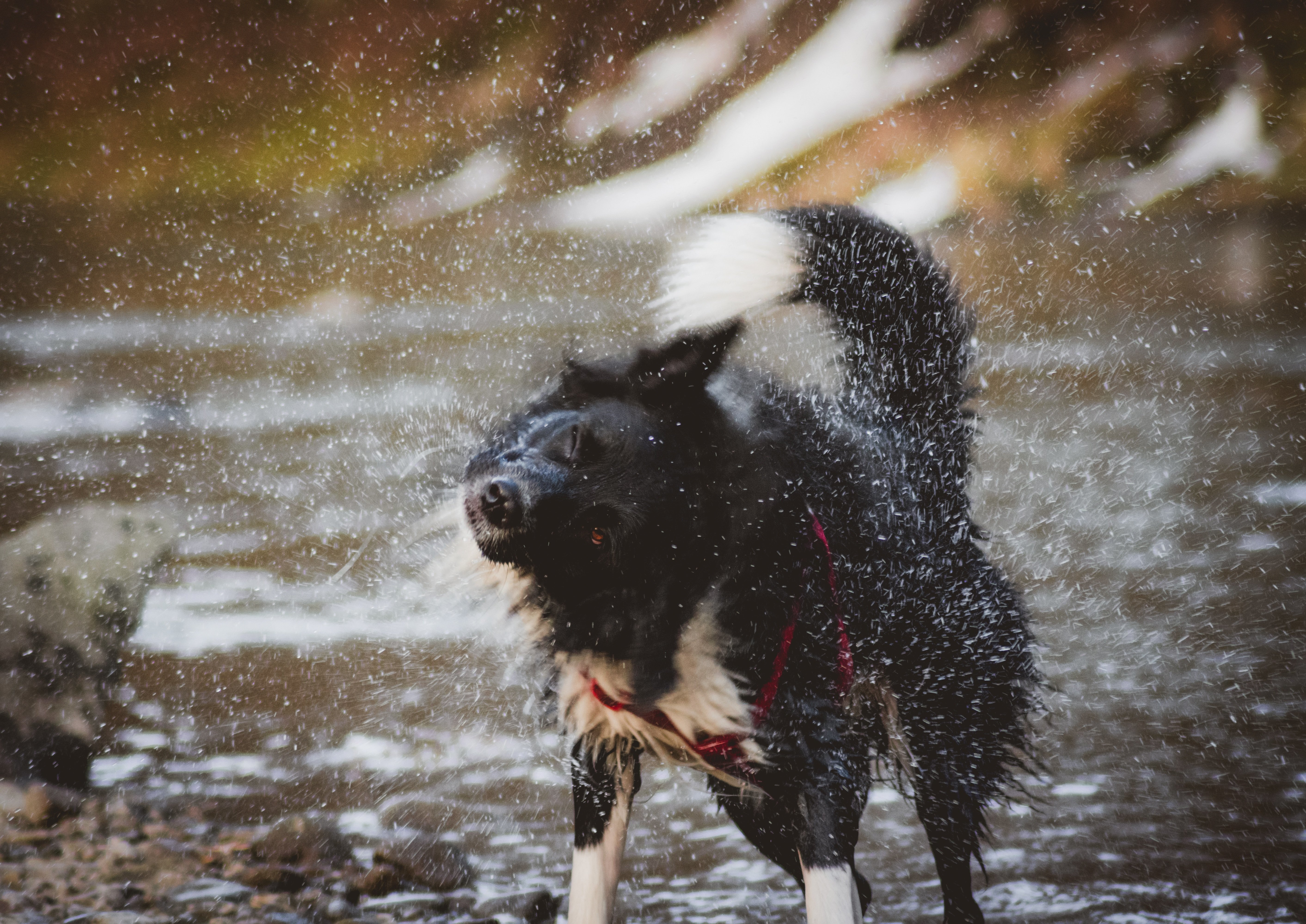 wet-dogs-winter-holiday