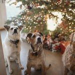 christmas-holidays-with dogs