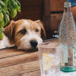 keep your dog hydrated