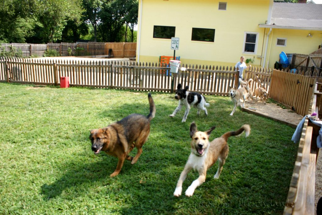 Boarding Your Dog: Kennels to Consider - Holidawgs | Pet