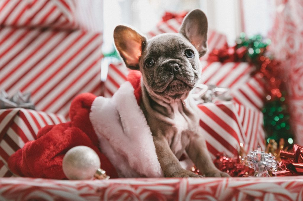The Best Toys for Your Dog This Xmas