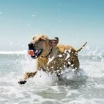 best pet-friendly beaches in cape town