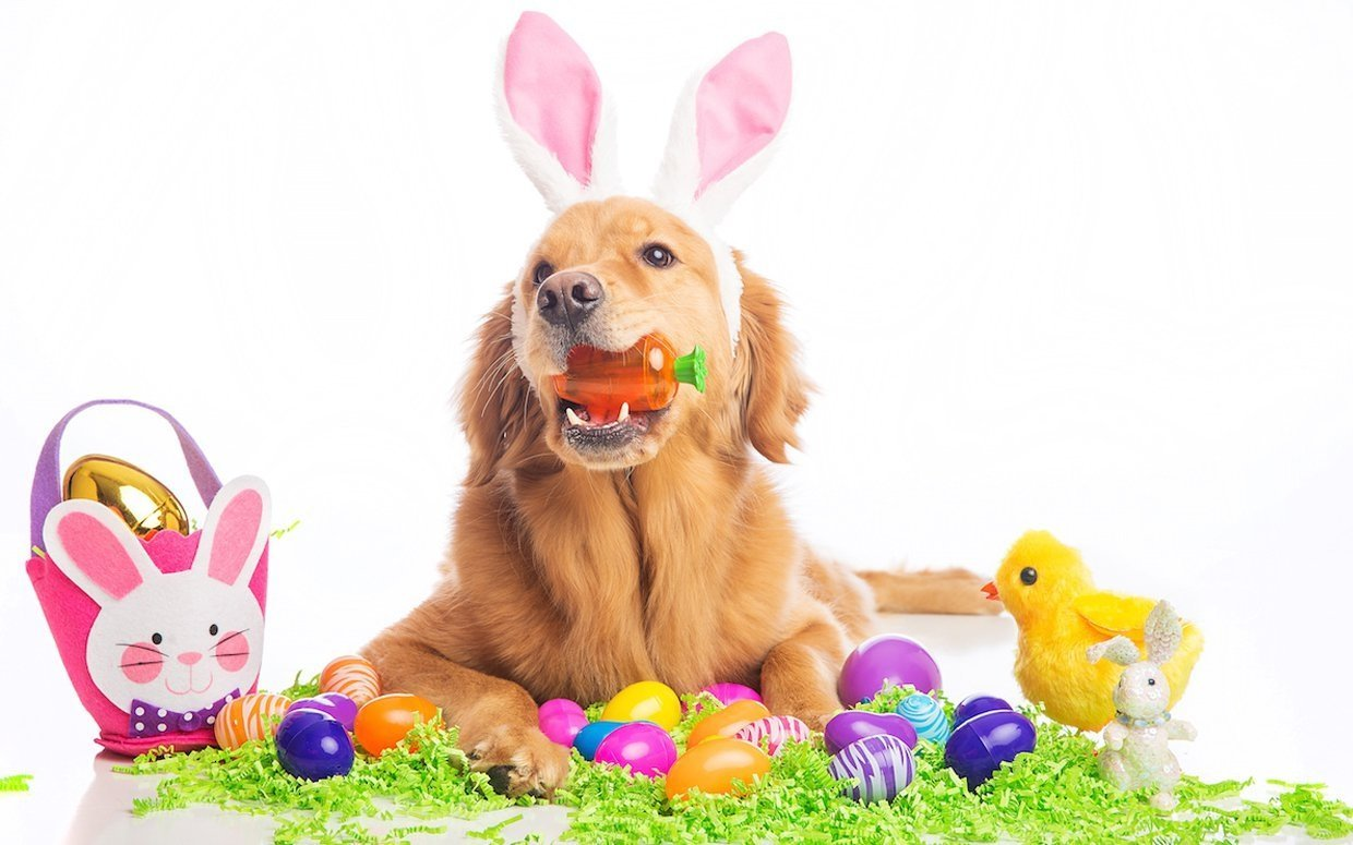 easter-treats-dogs