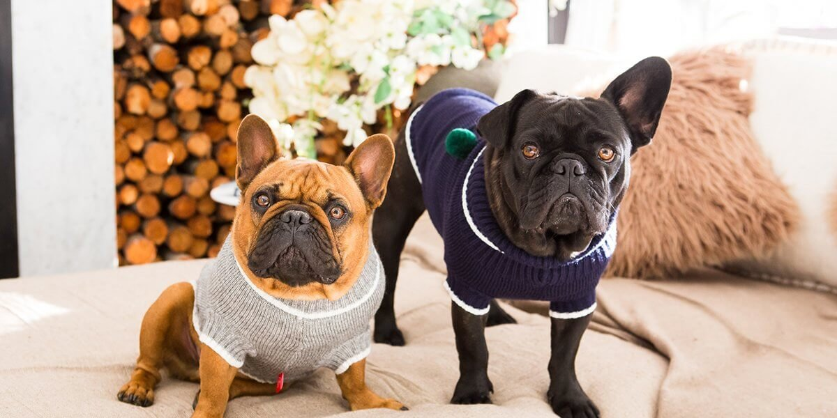 dogs life jackets, fleeces for dogs