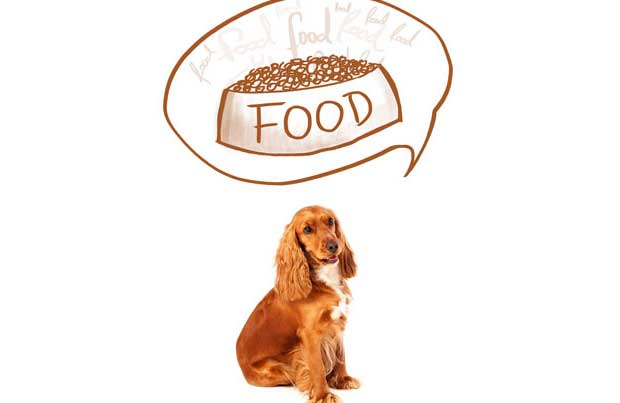 dog-diets how to guide