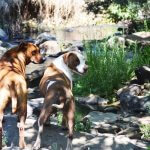 magaliesburg-dog-friendly-hikes