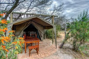 khwattu-pet-friendly-camping-western-cape