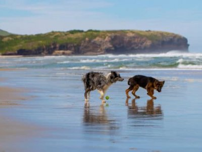 pet-friendly-beaches-eastern-cape
