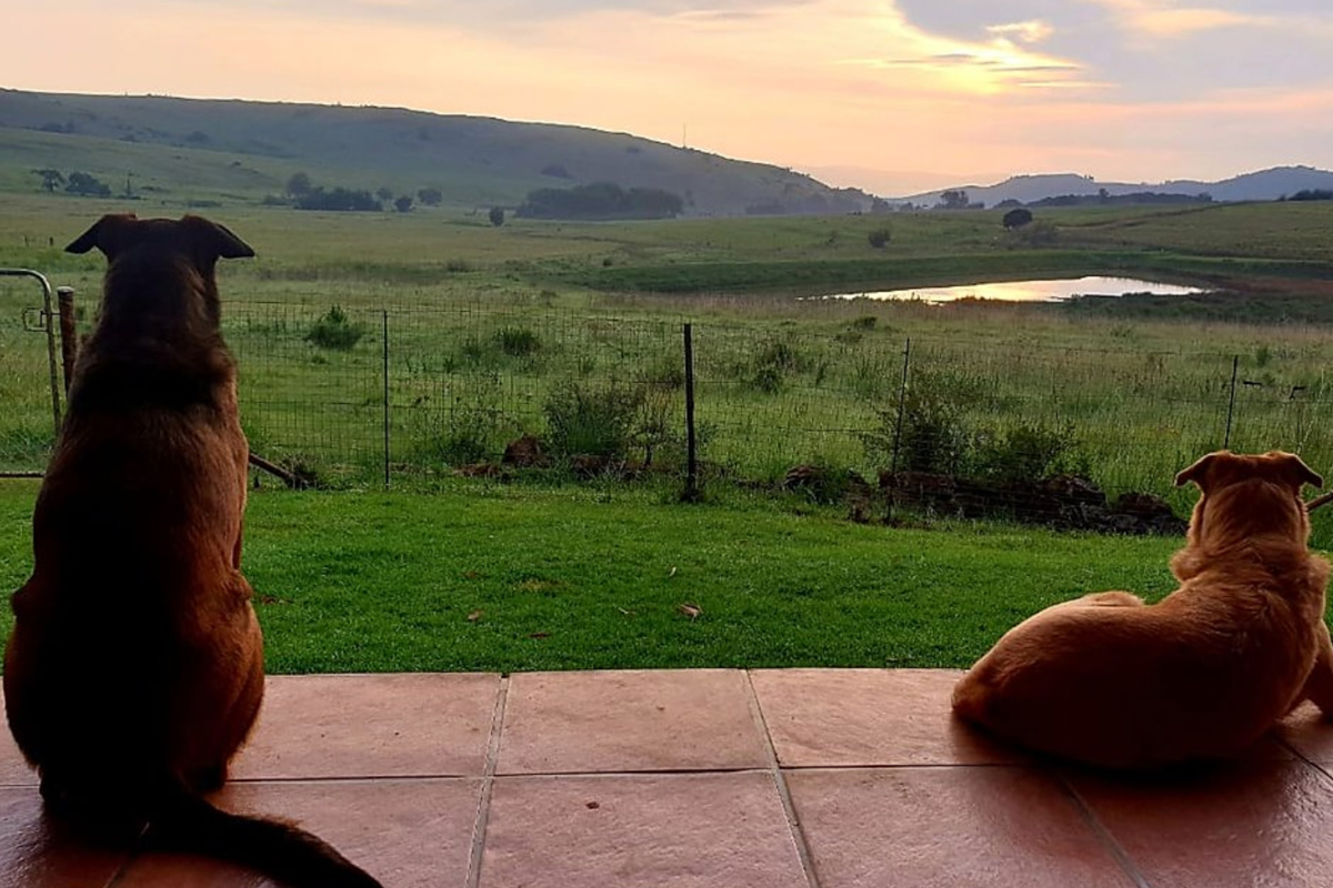 Highlands Fish Eagle Cottage views and dogs-1