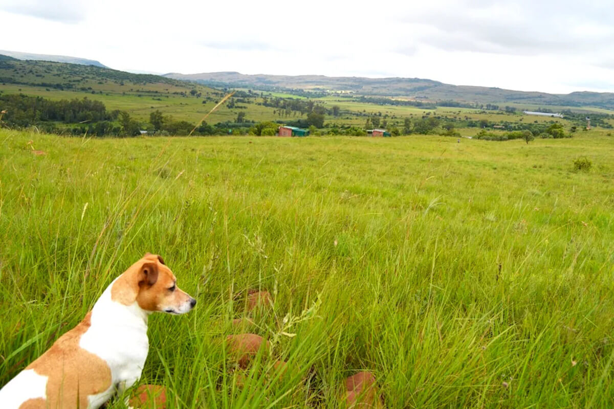 karee-and-olienhout-cottages-magaliesburg-dog-friendly-accommodation