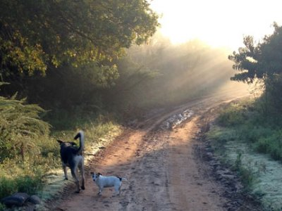 free-state-pet-friendly-clarens